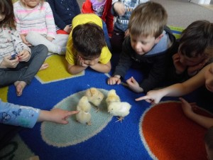 A VISIT FROM OUR CHICK FRIENDS
